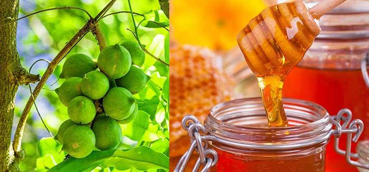 عسل آجیل ماکادمیا در مقاله انواع عسل