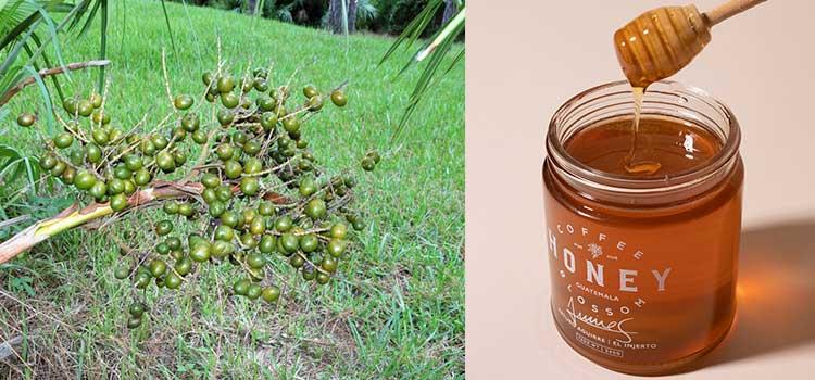 عسل پالمتو در مقاله انواع عسل