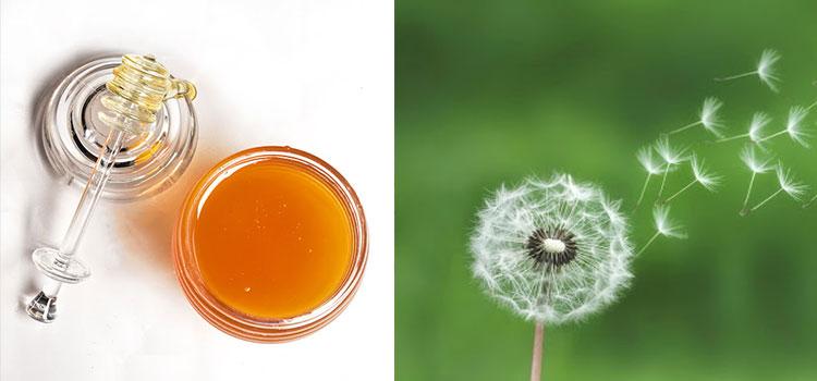 عسل  قاصدک در مقاله انواع عسل