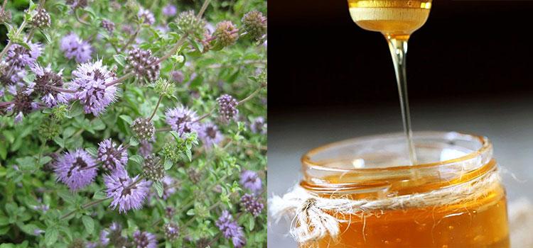 عسل پونه کوهی در مقاله انواع عسل