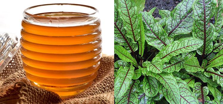 عسل ترشک در مقاله انواع عسل