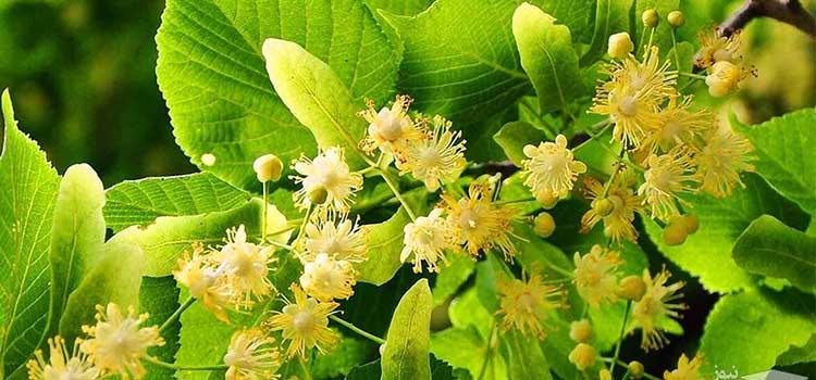 عسل زیروفن در مقاله انواع عسل